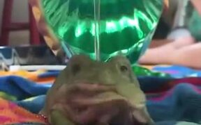 How To Bathe A Frog