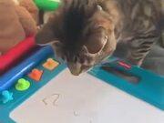 A Cat Experiencing A Magic Slate