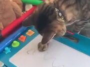 A Cat Experiencing A Magic Slate