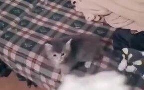 Ferocious Kitten