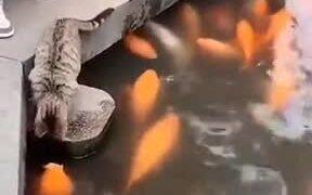 Good Cat Petting Live Fish