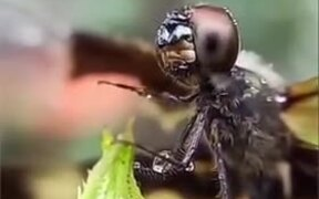 Dragonfly Wiping Off Water