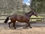Horse Facing A Jumping Mistake