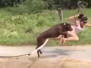 Most Hilarious Dog Training Ever
