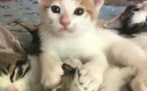 Kitten Displaying Her Weird Love