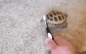 A Dancing Tortoise