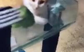 Cat Provides The Best Reaction To Broccoli