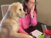 Dog Helping Human With A Computer
