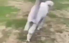 Never Go Near Lamas