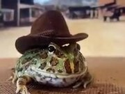 The Only Cowboy Frog In The World