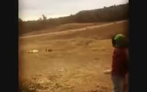 Little Kid Playing Baseball With Dog
