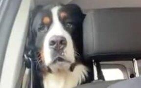 Doggy Drooling Watching Human Food