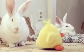 When Your Bunny Does Not Care For A Toy