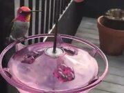 A Feeder For Hummingbirds