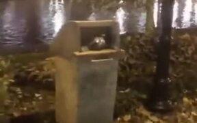 Kids Disturbing A Raccoon