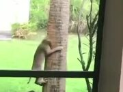 Cat Trying To Catch A Squirrel