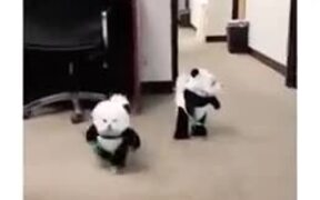 Panda Dogs Are The Cutest Outfit