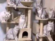 A New Kind Of Cat Magic