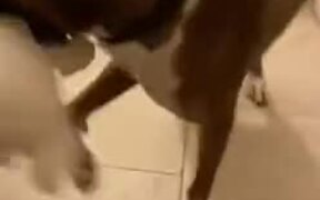 Dog Brings Present To Mother Every Time