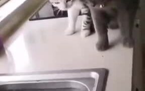 When A Fish Chased After Two Cats