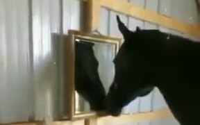 Horse Watching A Mirror For The First Time