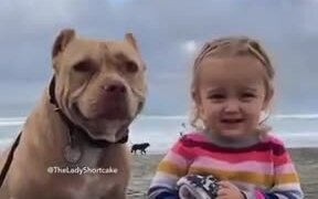 Pitbull And Little Girl Posing For A Picture