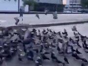 The Real Birdman