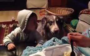 Dog Saying Mama!