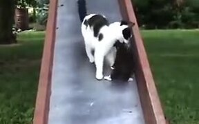 Mother Cat Trying To Control Kittens On A Slide