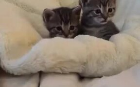 Kitten Scared By Finger