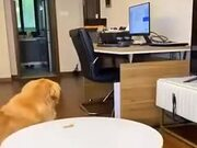 A Very Clever Dog