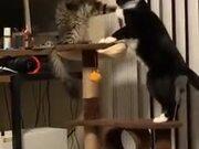 Two Kitties Gently Playing