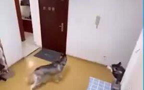 Dogs Slamming The Door On The Delivery Man