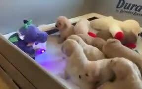 Stuffed Dinosaur Reading Story To Puppies