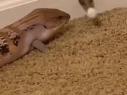 Lizard Playing With The Door Stop