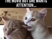 When Your Bae Wants Attention On Movie Night