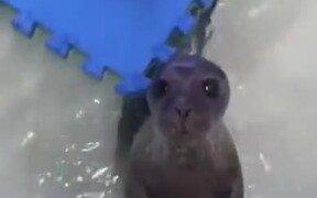 The Cutest Looking Baby Seal