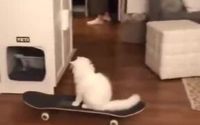 A Cat Skateboarding In The House