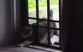 Hilarious Struggle Of A Fat Cat