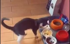Cat Malfunctioning From Different Food