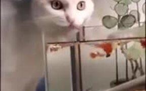 Cat Drinking Fish-Water
