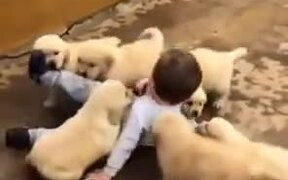 Young Boy Attacked By Cute Puppy Litter