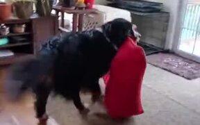 Doggo Doesn't Sleep On The Floor
