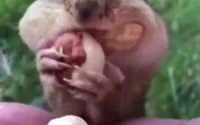 Human Feeding A Squirrel