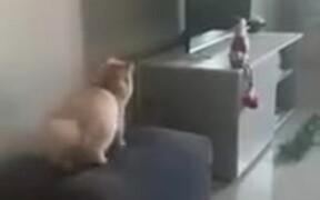 Fat Cat Faces Jumping Failure