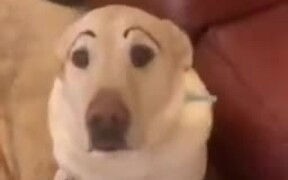 Give Your Dog Eyebrows