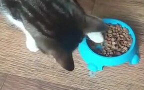 Cat Only Eats From The Floor
