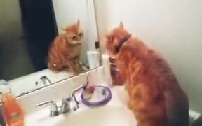 Cat Who Doesn't Like A Mirror