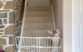 Dog Literally Breaking The Barrier