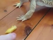 Dragon Unable To Eat Fruit